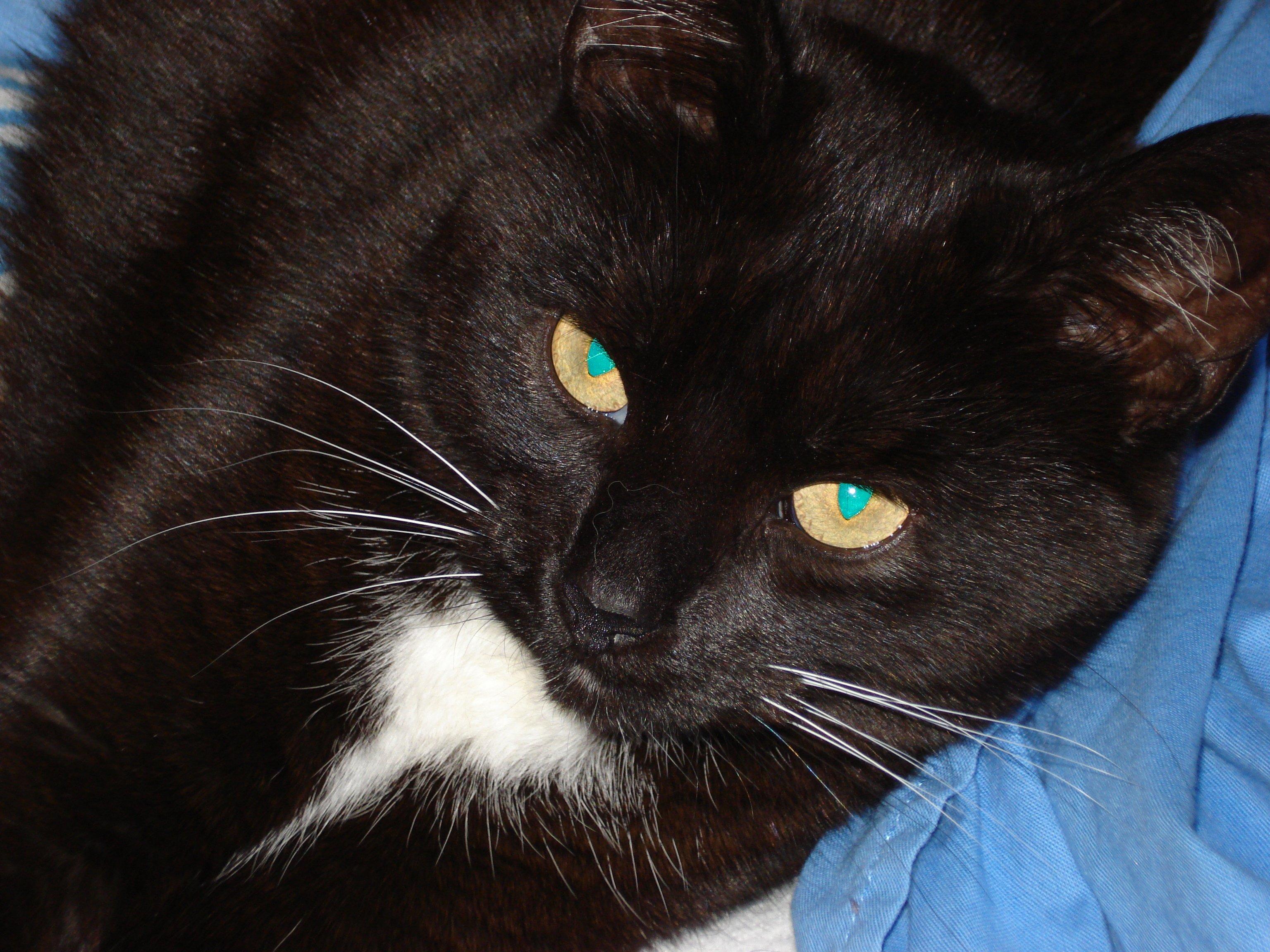 superstitions et pr sages li s aux chats at mon royaume. Black Bedroom Furniture Sets. Home Design Ideas